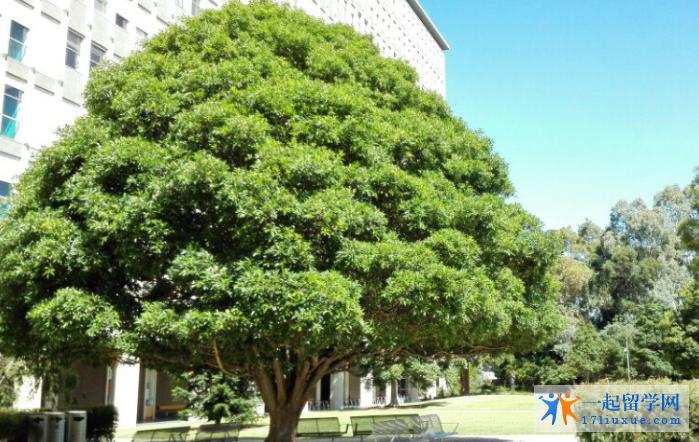 莫纳什大学图片3