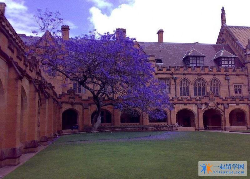 澳洲留学:恭喜程同学成功申请悉尼大学, 墨尔本大学的offer