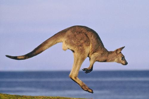留学澳洲的签证续签需要哪些材料?