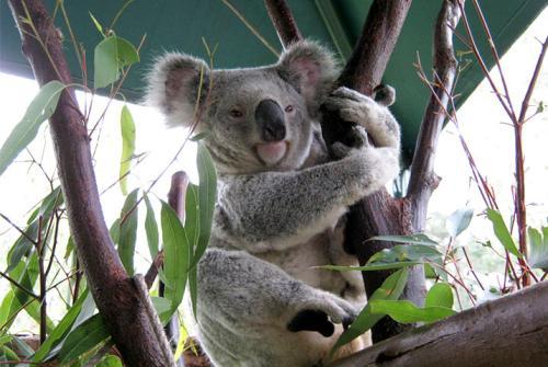 留学去澳大利亚住宿方面的简介