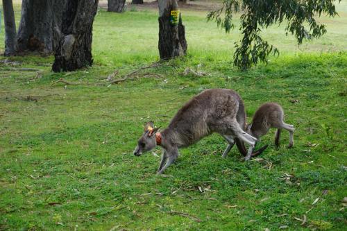 留学澳大利亚存在哪些优势