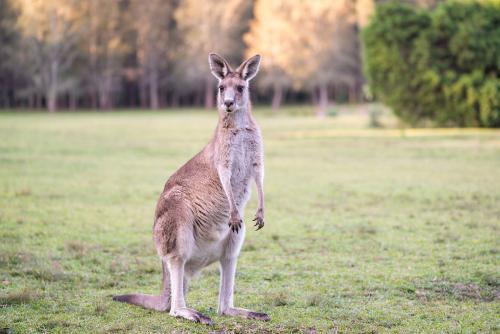 解析澳大利亚留学生生活费、住宿费、兼职、奖学金等费用问题