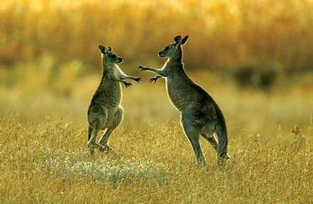 解析澳洲留学生活需要注意什么,需要带什么