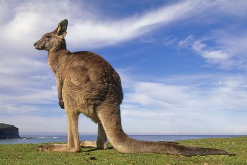 南昆士兰大学研究生留学条件、热门专业以及就业前景