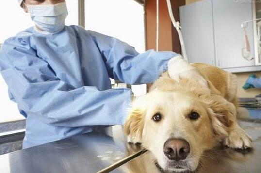 新西兰梅西大学兽医科本科详细解析