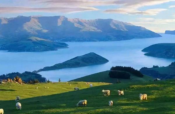 新西兰留学奖学金申请的条件是什么?