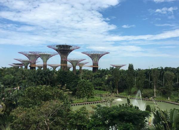 新加坡莎顿国际学院研究生申请条件及入学要求